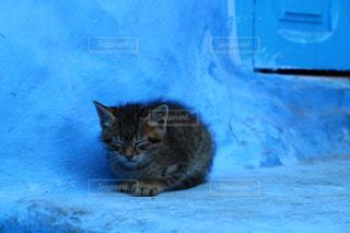 モロッコの猫の写真・画像素材[2970895]