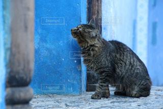 モロッコの猫の写真・画像素材[2970899]