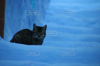 モロッコの猫の写真・画像素材[2970900]