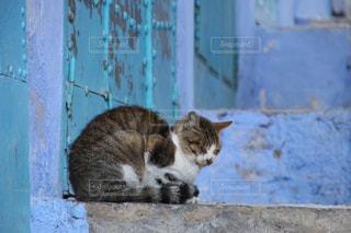 モロッコの猫の写真・画像素材[2970902]