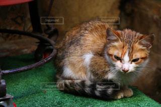 モロッコの猫の写真・画像素材[2970923]