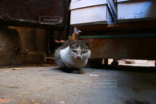 モロッコの猫の写真・画像素材[2970920]