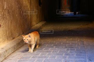 モロッコの猫の写真・画像素材[2970921]