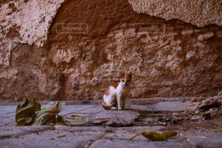 モロッコの猫の写真・画像素材[2970922]