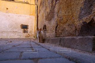 モロッコの猫の写真・画像素材[2970915]