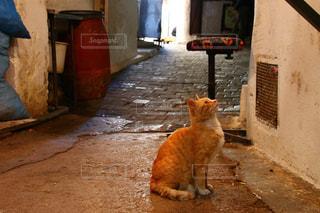 モロッコの猫の写真・画像素材[2970919]