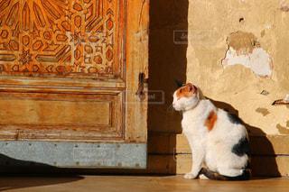 モロッコの猫の写真・画像素材[2970917]