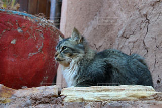 モロッコの猫の写真・画像素材[2970914]
