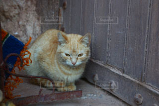 モロッコの猫の写真・画像素材[2970912]