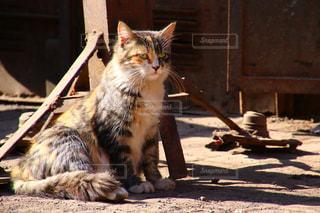 モロッコの猫の写真・画像素材[2970911]