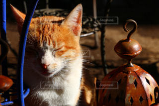 モロッコの猫の写真・画像素材[2970909]