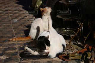 モロッコの猫の写真・画像素材[2970910]