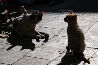 モロッコの猫の写真・画像素材[2970907]
