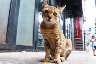 リゾ猫の写真・画像素材[2970946]