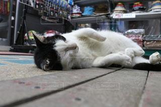 リゾ猫の写真・画像素材[2970948]