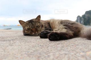 リゾ猫の写真・画像素材[2970943]