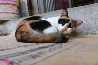 リゾ猫の写真・画像素材[2970945]