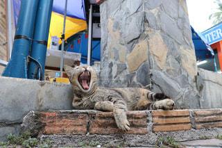 石造りの建物の上に横たわる猫の写真・画像素材[2970954]