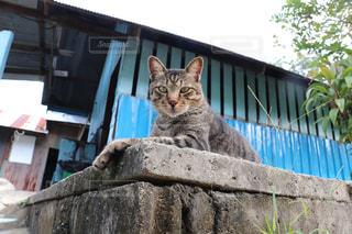 リゾ猫の写真・画像素材[2970955]