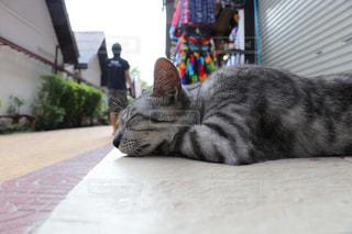 窓の前に横たわる猫の写真・画像素材[2970949]