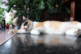リゾ猫の写真・画像素材[2970952]