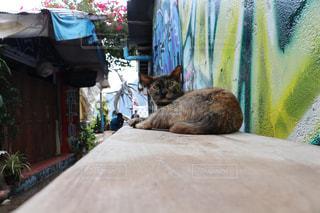 リゾ猫の写真・画像素材[2970944]