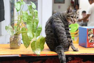 リゾ猫の写真・画像素材[2970947]