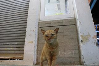 建物の上に座っている猫の写真・画像素材[2970951]