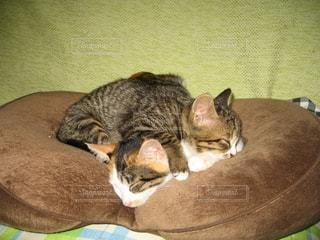 保護猫2匹仲良しの写真・画像素材[2707502]