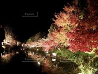 自然の写真・画像素材[2626549]