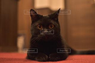 猫,動物,屋内,ペット,人物,座る,黒猫,目,見つめる,キティ,ネコ,ネコ科の動物