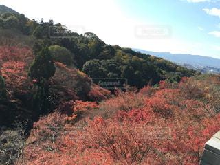 背景に山がある木の写真・画像素材[2540553]