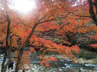 水域の隣の木の写真・画像素材[2540682]
