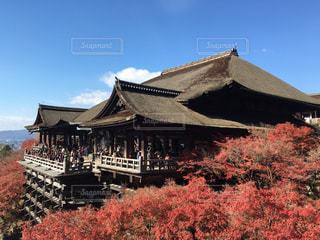 清水寺を背景にした紅葉の写真・画像素材[2557128]