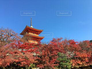 建物の前の大きな木の写真・画像素材[2557236]