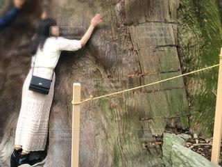 大きな木の写真・画像素材[2722755]