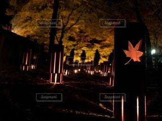 ライトアップ☆*。の写真・画像素材[2732794]