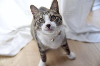 猫,動物,屋内,ペット,人物,ネコ,保護猫