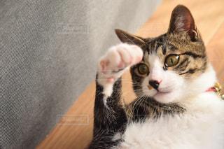 猫,動物,ペット,人物,ネコ,保護猫