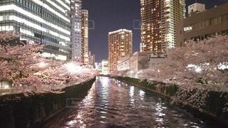 桜,夜景,川,水面,花見,夜桜,都会,目黒川,コントラスト