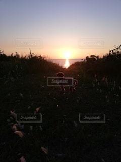 犬,海,空,夕日,動物,屋外,太陽,夕暮れ,景色,光