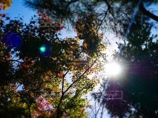 木のクローズアップの写真・画像素材[2521573]