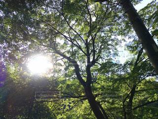 自然,空,森林,屋外,太陽,日光,光,快晴,日陰,草木