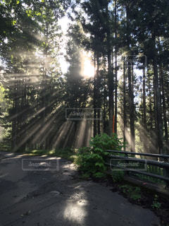 木漏れ日ラインの写真・画像素材[2625557]