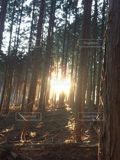 夕日の写真・画像素材[2625618]