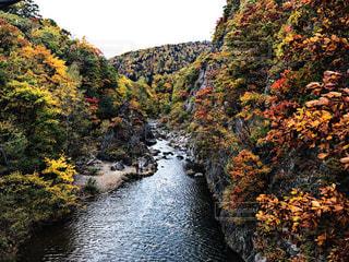 木々に囲まれた川の写真・画像素材[2552428]
