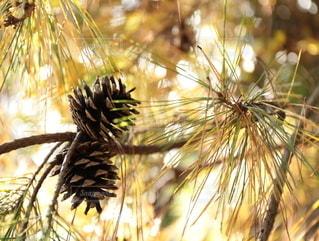 植物のクローズアップの写真・画像素材[2789729]