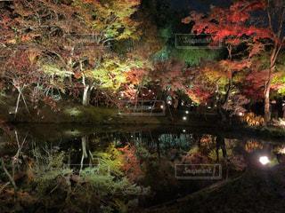 池の近くにの写真・画像素材[2772165]