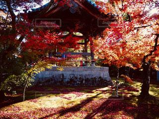 秋の金閣寺。の写真・画像素材[2638200]
