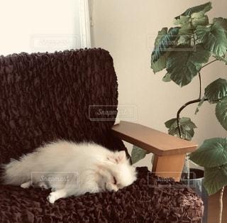 熟睡。の写真・画像素材[2727016]